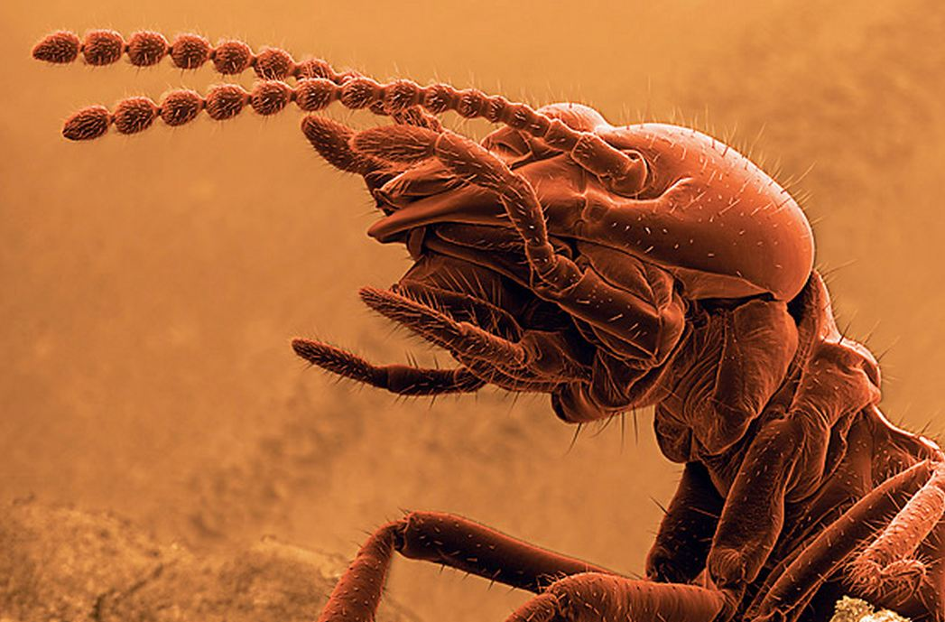 Pictures of Termite Worms http://motleynews.net/2011/07/06/electron-microscopic-scans-of-the-insects-among-us/