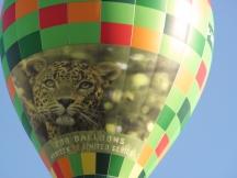 Albuquerque Balloon Fiesta Special Shapes Zoo Balloon