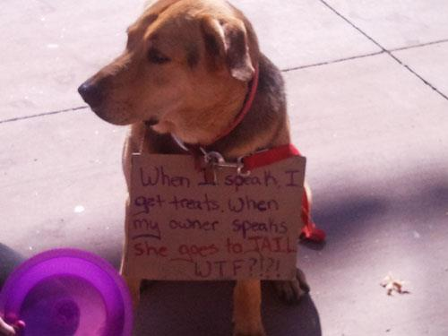 dogs of occupy