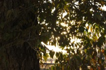 jpeg untouched Sun through the trees