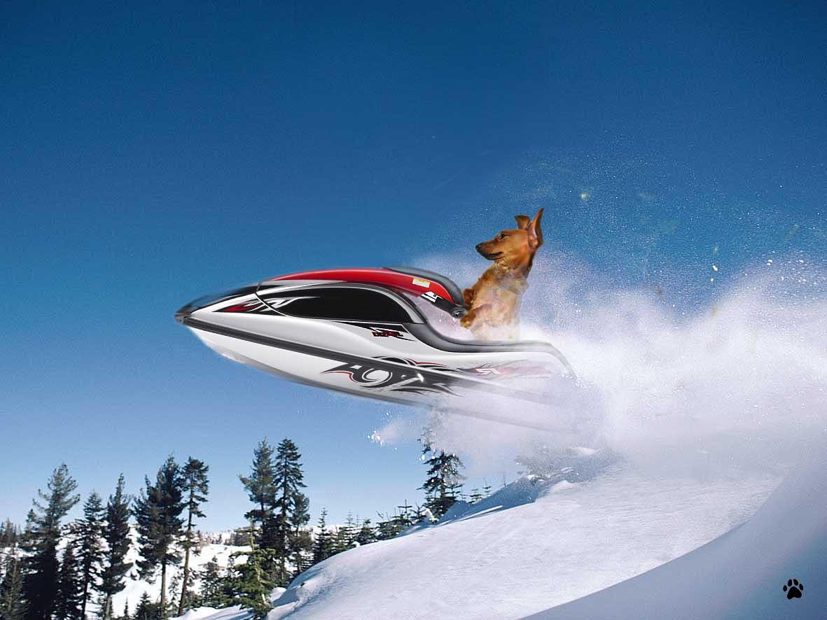Dog riding jet ski in snow 02