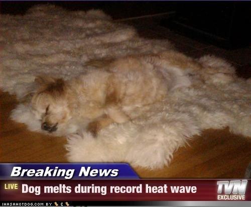 Funny Hot Dog Meme : Funny dog photos with humorous captions motley news