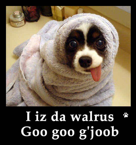 Funny Dog Photos with Humorous Captions – Motley News ...
