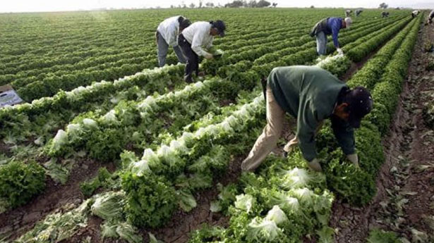 Alabama migrant workers