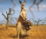 Australian Tourism: Stupid Answers to Stupid Questions