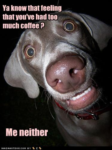 Ok, too much coffee is not ok just before bed!!! Just ... |Too Much Caffeine Animal