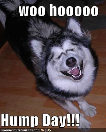 Funny Hump Day Cat Pics