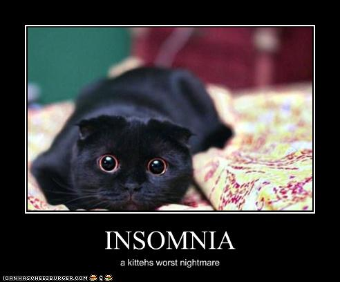 insomnia a kitty's worst nightmare