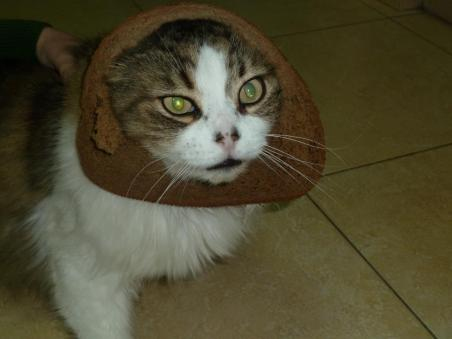 Facebook craze bread on cats head 01