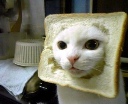 Latest Craze: Putting Bread on your Cat's Head Pictures (1/6)