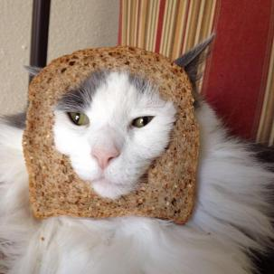 Facebook craze bread on cats head 04