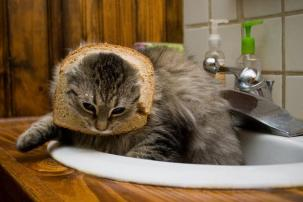 Facebook craze bread on cats head 05
