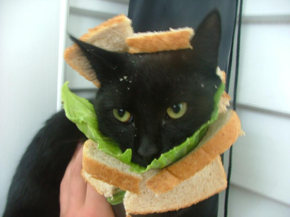 Latest Craze: Putting Bread on your Cat's Head Pictures (2/6)