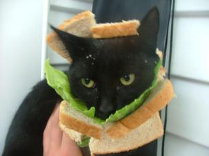 Facebook craze bread on cats head 06