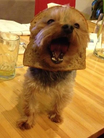 Facebook craze bread on dogs head 01
