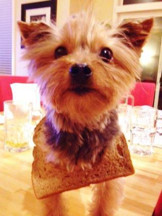 Facebook craze bread on dogs head 02