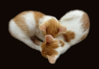 heart shaped kittens
