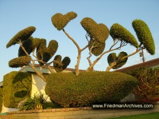Heart shaped trees