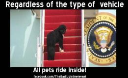 Hump Day Bo the First dog boarding Air Force One