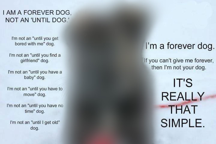I am a forever dog not an until dog blurred