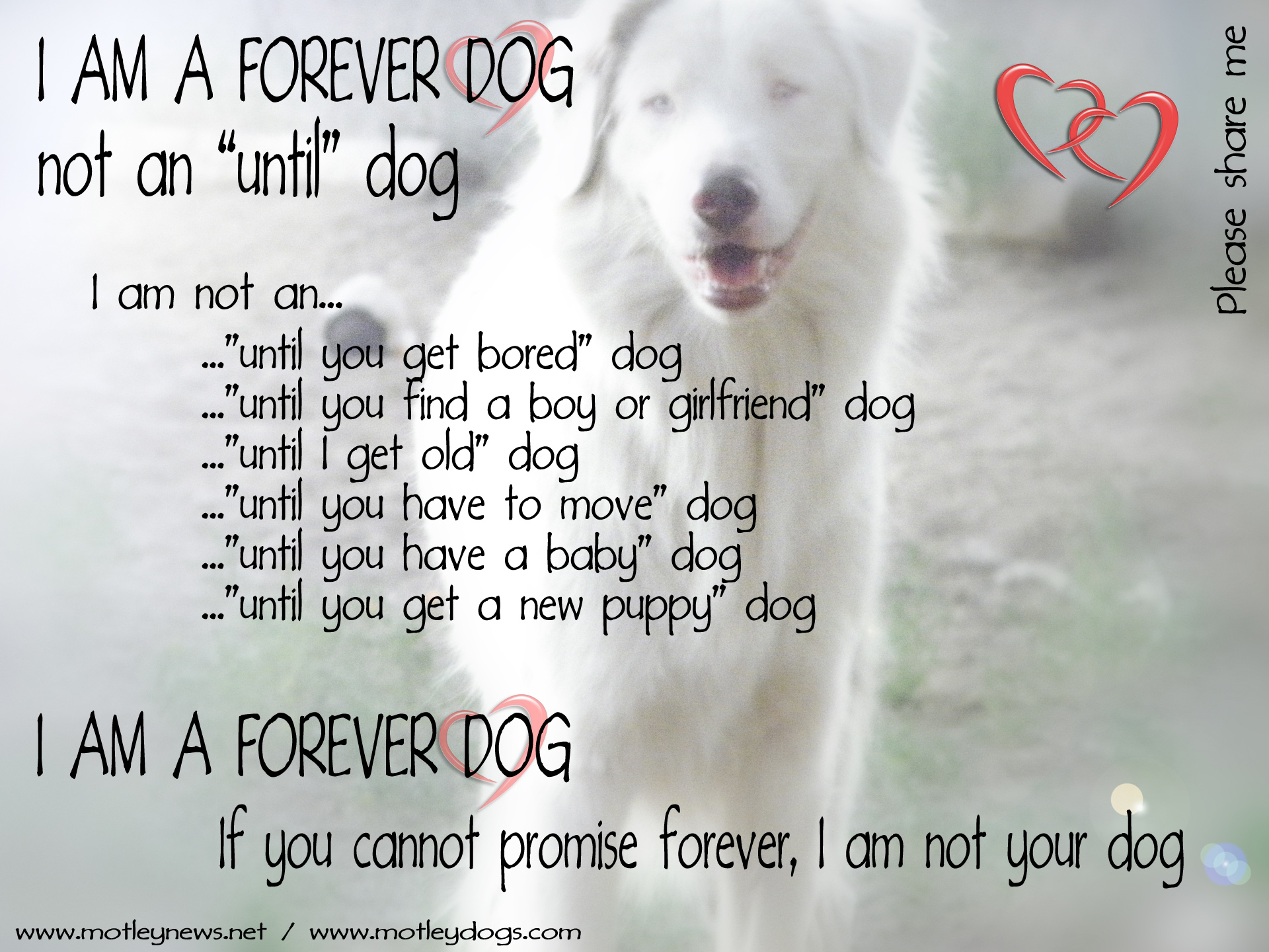 I am a Forever Dog, Not an Until Dog – Motley News