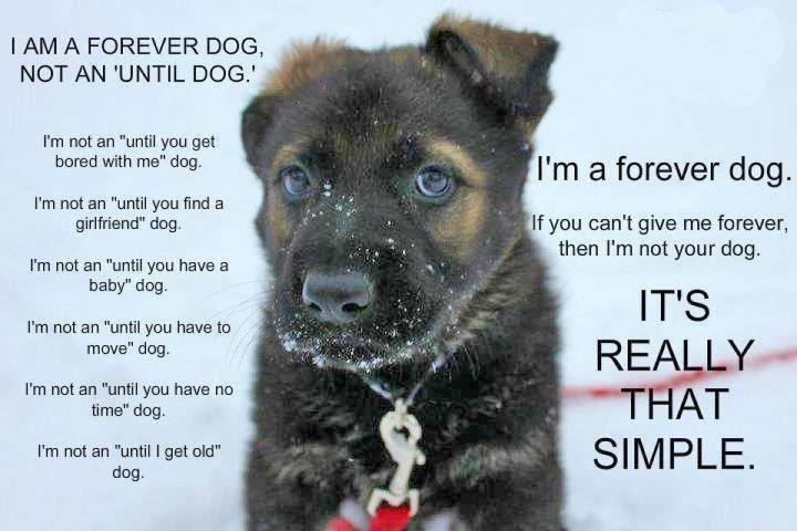 I am a forever dog not an until dog