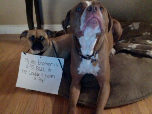 Letter sent to BADRAP in protest to McDonald's commercial mentioning stray pit bulls 06
