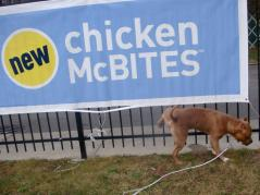 Letter sent to BADRAP in protest to McDonald's commercial mentioning stray pit bulls 11