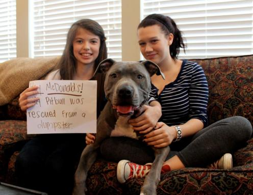 Letter sent to BADRAP in protest to McDonald's commercial mentioning stray pit bulls 14