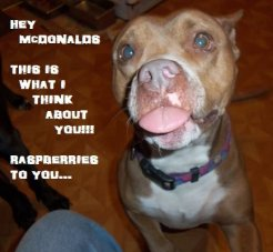 Letter sent to BADRAP in protest to McDonald's commercial mentioning stray pit bulls 15