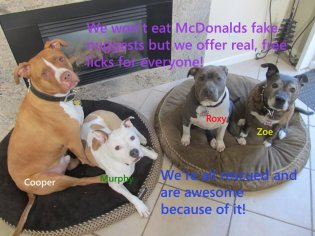 Letter sent to BADRAP in protest to McDonald's commercial mentioning stray pit bulls 19