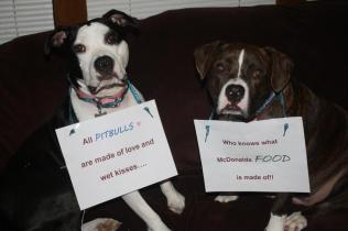 Letter sent to BADRAP in protest to McDonald's commercial mentioning stray pit bulls 21