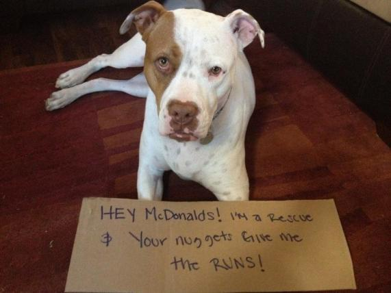Letter sent to BADRAP in protest to McDonald's commercial mentioning stray pit bulls 24