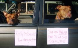 Letter sent to BADRAP in protest to McDonald's commercial mentioning stray pit bulls 26