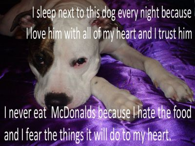 Letter sent to BADRAP in protest to McDonald's commercial mentioning stray pit bulls 29