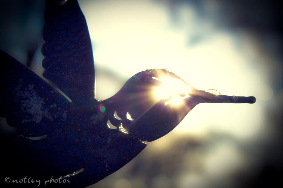 Photo Project 365 021512 Sun coming through the eye of a iron yard hummingbird decoration