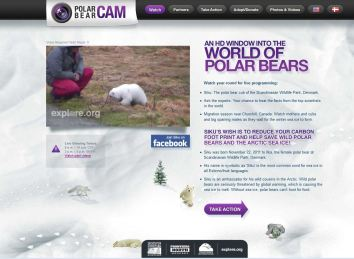 Siku the polar bear cub live cam