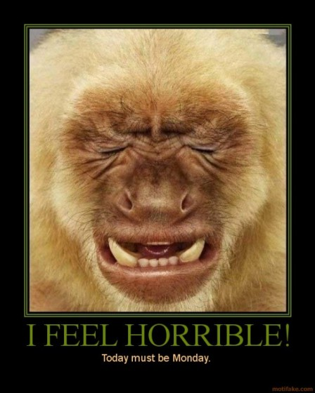 Funny Photo With Caption Monkey Hates Mondays