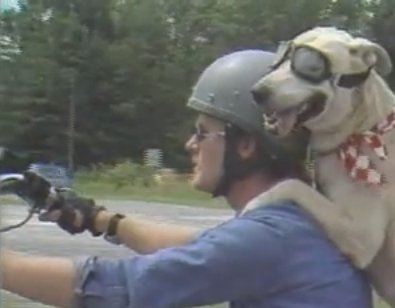 Gary Miller and his motorcycle dog