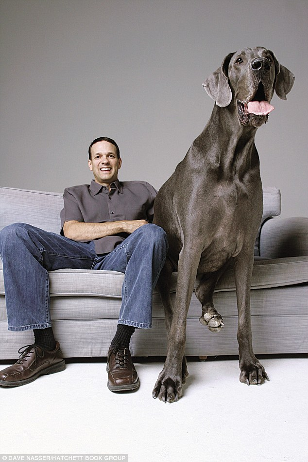 Giant George The 7 Foot Tall Great Dane Photos And New