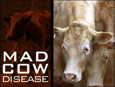 a look at the mad cows disease and mad man There are two types of bse, more commonly known as mad cow disease men  and women experience mental health issues differently.