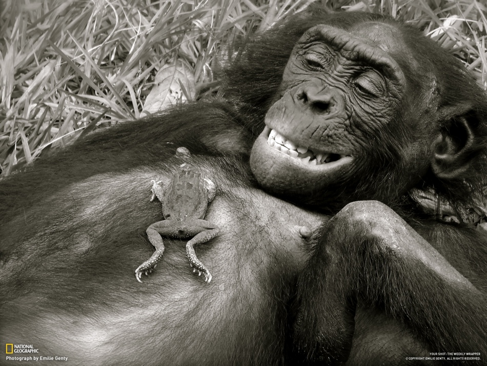 monkey-and-frog - Best Friends  - General Topic