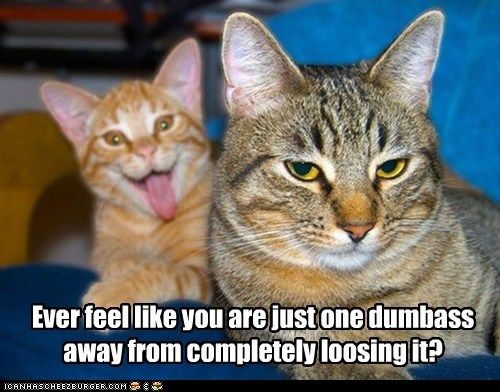 ... News' 1,000th Post! Time to Celebrate with Funnies! – Motley NewsLolcat Celebrate
