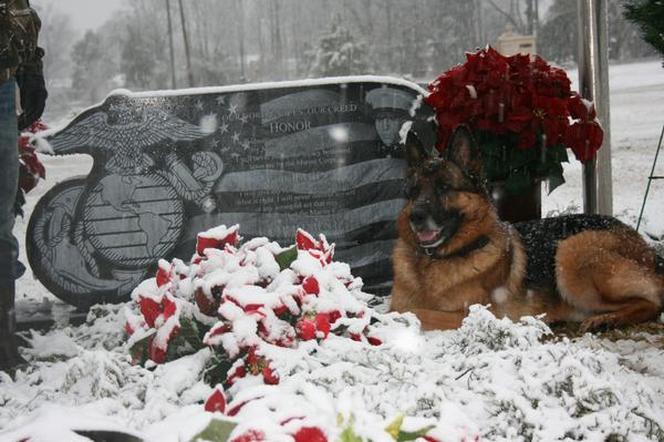 memorial day  in remembrance of lex and dusty  two devoted
