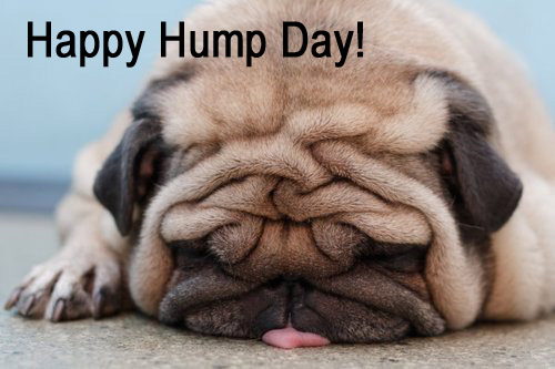 Hump Day Dog Pics