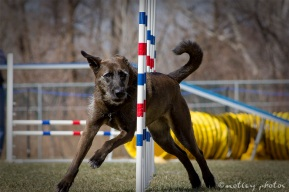 Agility Community Center_20120311_All American Dog_weave poles 01
