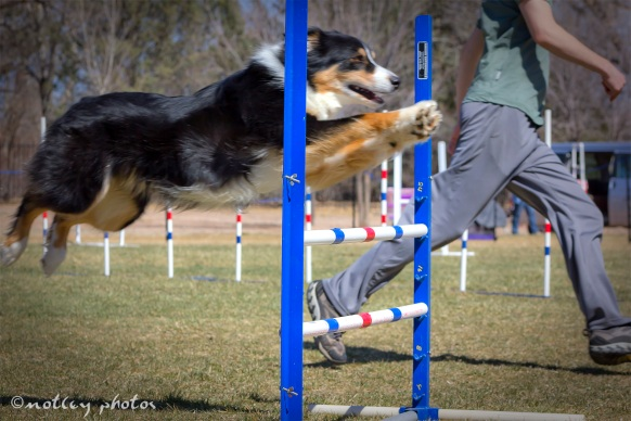Agility Community Center_20120311_Border Collie Aussie_Jump 03 side view