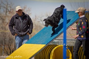 Agility Community Center_20120311_Jane's black dog_A-frame 01