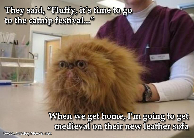 Funny Cat Photo With Captions What Vet Doing Behind The