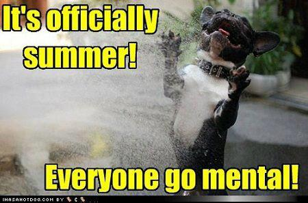 Image result for dog summer meme